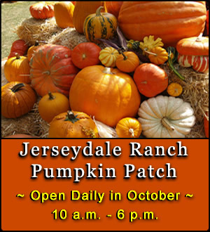 Jerseydale-Ranch-Pumpkin-Patch-2014