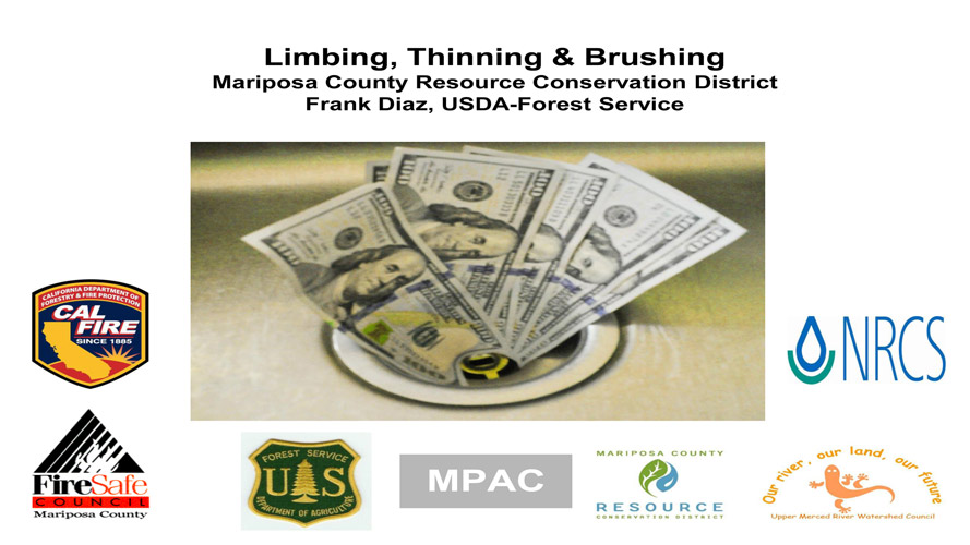 mariposa-county-tree-limbing-thinning