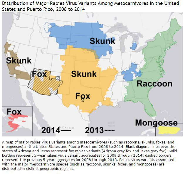 cdc skunk major rabies