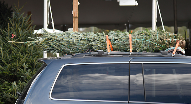 3 tips to find your ideal Christmas tree