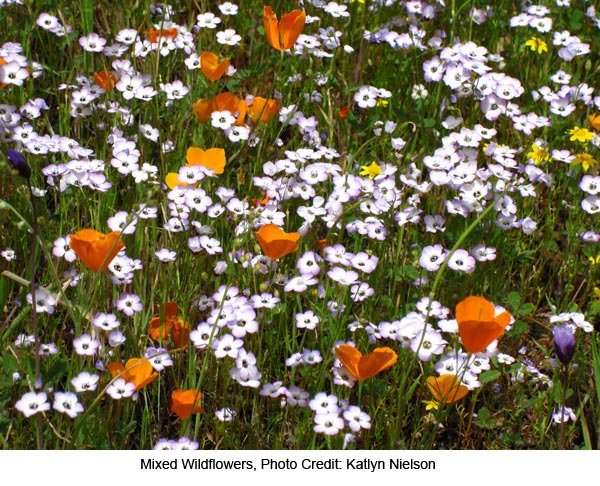 Mixed-Wildflowers-Katlyn-Nielson