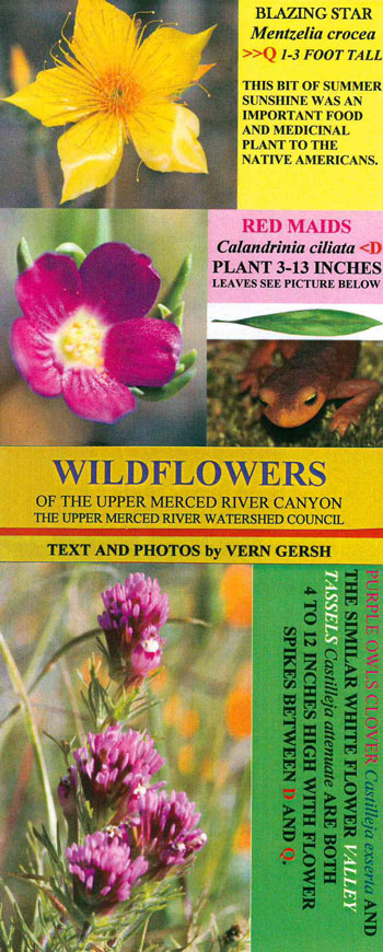 Wildflower-Brochure-Vern-Gersh
