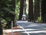Lawsuit Challenges Highway Widening Through Ancient California Redwoods