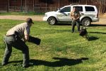 Mariposa County Sheriff's Office 2014 K9 Stats Include 10 Bomb Sweeps