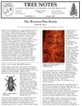 Everything You Need to Know About the Western Pine Beetle Attacking Trees in Madera County and Mariposa County