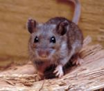 California Department of Public Health Urges Caution on How to Avoid Hantavirus following Diagnosis in Northern California Man