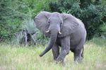 California Senator Dianne Feinstein to Interior Secretary Zinke: Protect African Elephants