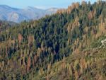 Prescribed Fires Reduce Tree Death from Drought
