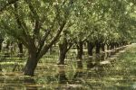 UCLA-led Researchers Track Groundwater Loss During Drought in California's Central Valley