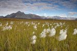 Obama Administration Moves to Protect Arctic National Wildlife Refuge With Conservation Plan