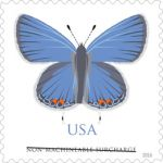 Postal Service Announces Butterfly Stamp to Alight On Post Office Locations Across Nation