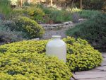 Mariposa Master Gardeners to Host Gardening with Drought-Tolerant Native Plants Workshop on May 9, 2015