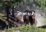 Come Celebrate the 40th Anniversary of Mariposa Pioneer Wagon Train on June 10-13, 2015