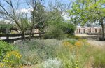 Mariposa Master Gardeners to Host Native Plants and Care Workshop on Saturday, November 4, 2017