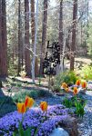 Mariposa Master Gardeners to Host Spring Garden Tour on May 16, 2015