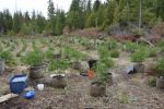 California Department of Fish and Wildlife Scientists Publish Groundbreaking Work on Marijuana's Effect on the Environment