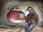 Wyoming Youth Wins the 2015 Federal Junior Duck Stamp Competition