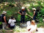 Sierra Foothill Conservancy 'Native Plants and Traditional Uses' Walk with Bill Leonard on May 23, 2015