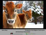 Enter Your Summer Photos in the American Farm Bureau Federation 2015 Photo Contest