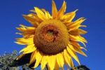 Enjoy the Mariposa Farm & Ranch Tour this Fall in Mariposa County on September 26, 2015