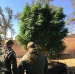 CDCR Crisis Response Team Helps Mariposa County Sheriff Take Down Illegal Grow