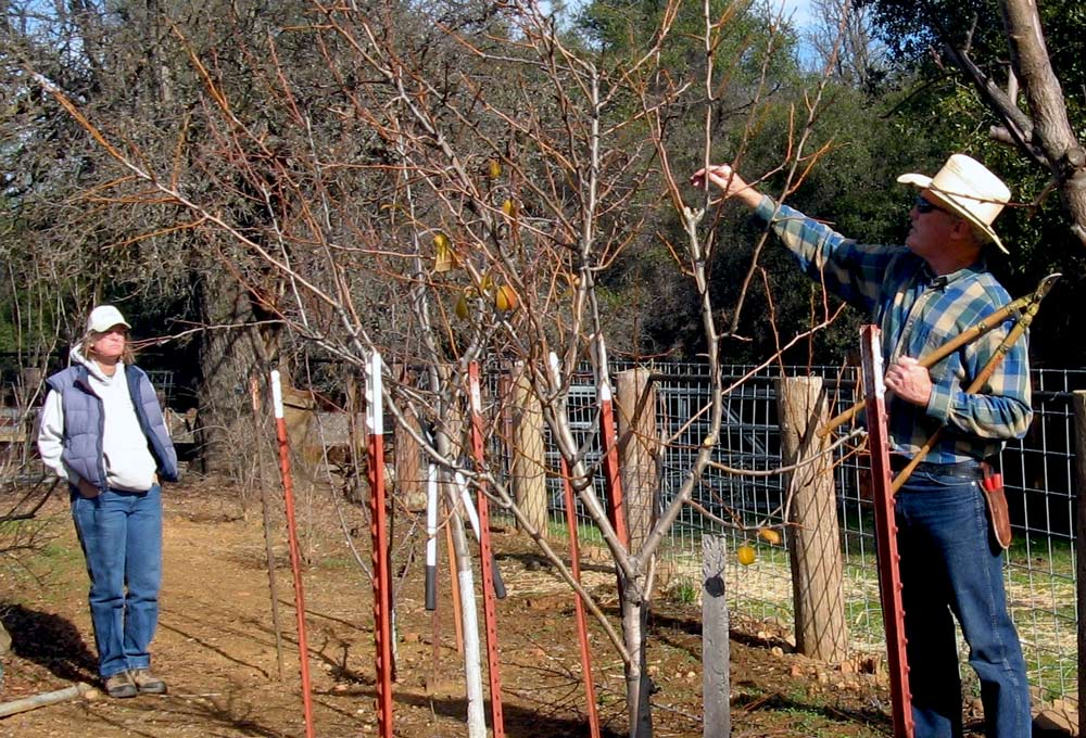 MG-Maxwell-Norton-at-coulterville-fruit-tree-pruning-2013