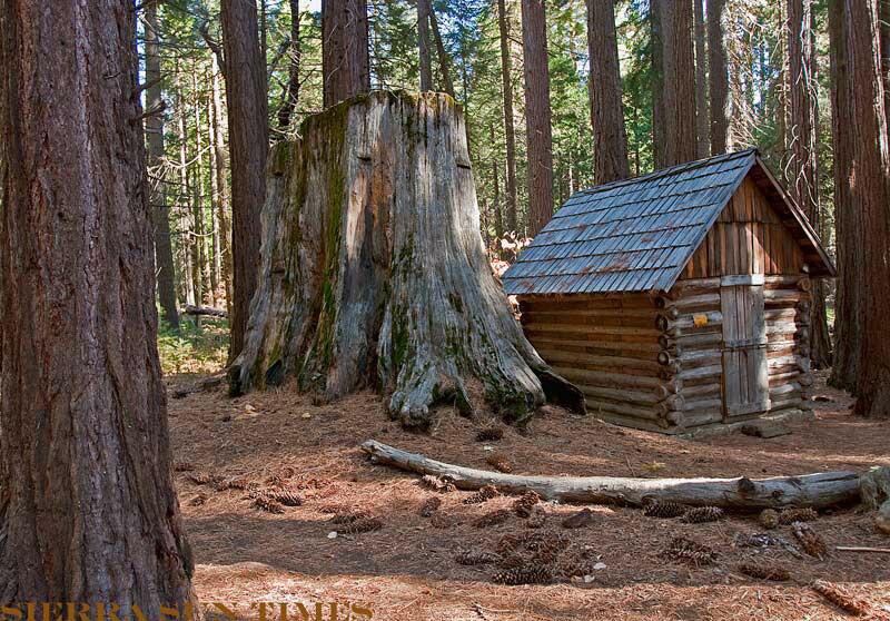 nelder grove sierra national forest sierra sun times