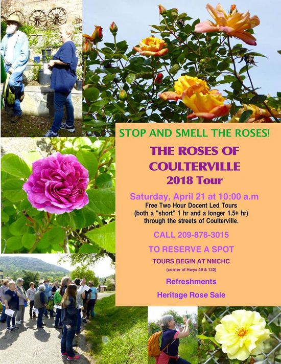 4 21 18 Coulterville Roses