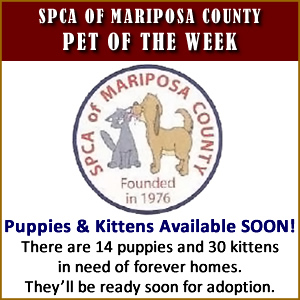 SPCA puppies and kittens